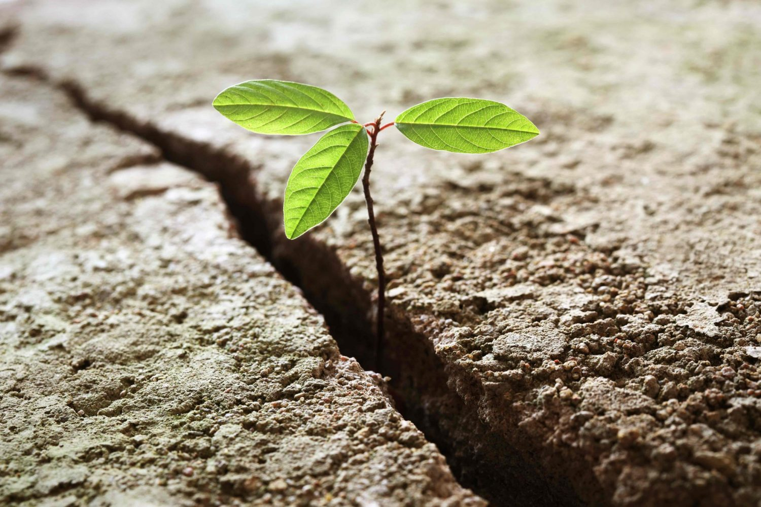 A young plant growing out of concrete. Concept of business break through