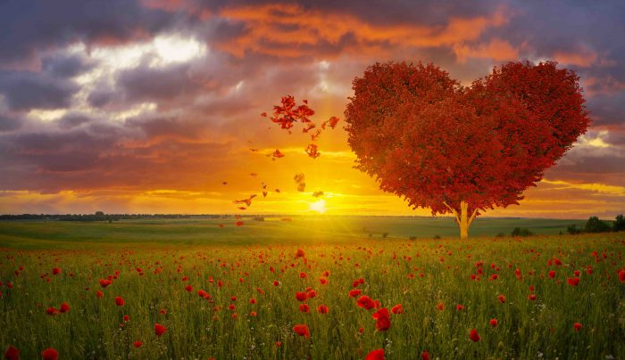 love, tree, heart, beautiful, shape, valentine, Valentine's Day, poppy, poppies, scenery, red, romantic, beauty, nature, abstract, landscape, spring,, natural, season, plant, concept, healthy, sky, leaves, backgrounds, colorful, field, grass, lonely, art, foliage, garden